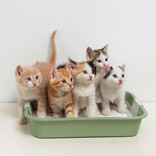 To avoid potential behavior issues (stress anxiety cat-to-cat aggression) you need to provide one litter box per cat PLUS one in the home. & 5 Best Litter Boxes - Dec. 2017 - BestReviews Aboutintivar.Com