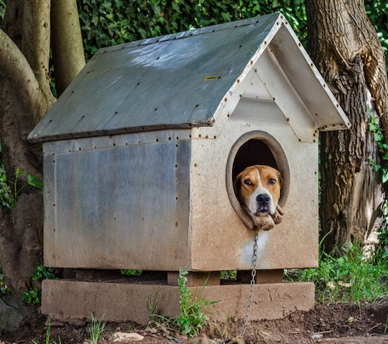 Best Dog Houses For Hot And Cold Weather