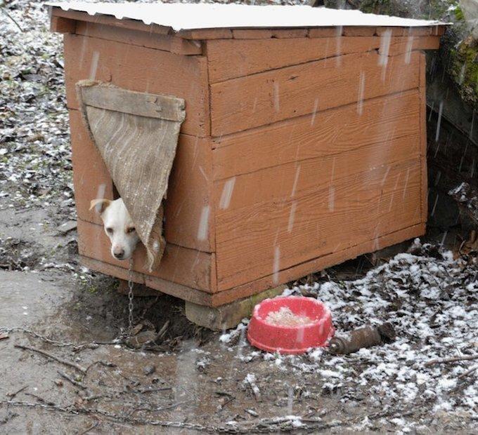 Petmate Indigo Igloo Style Dog House Reviews