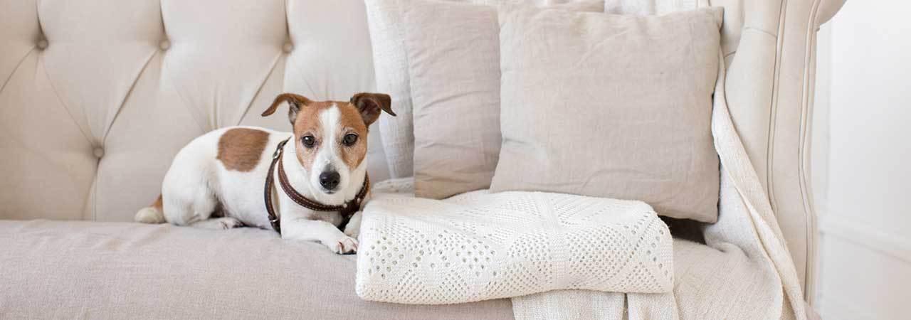 Astounding 5 Best Pet Furniture Covers Dec 2019 Bestreviews Andrewgaddart Wooden Chair Designs For Living Room Andrewgaddartcom