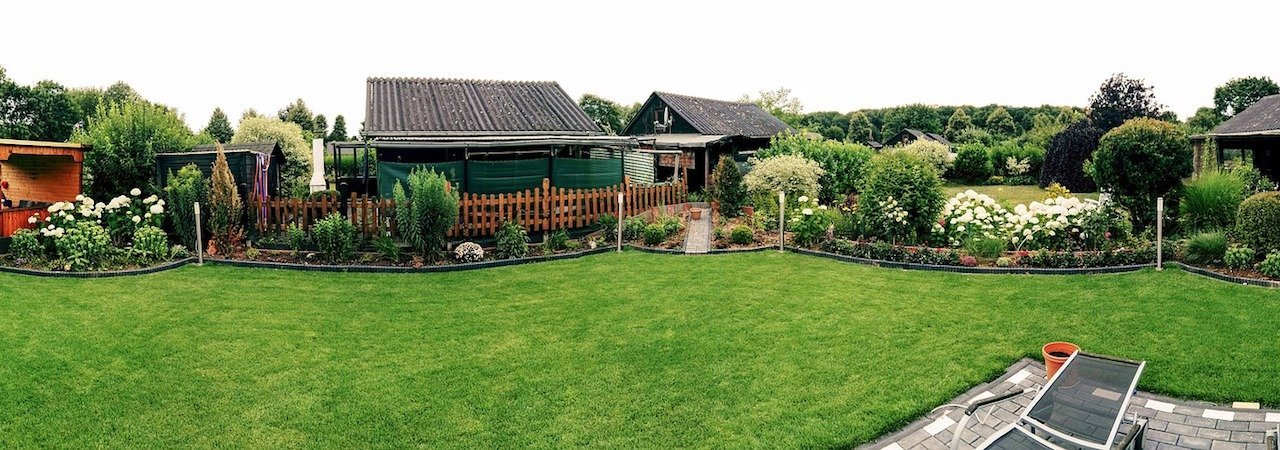 best patch grass seed