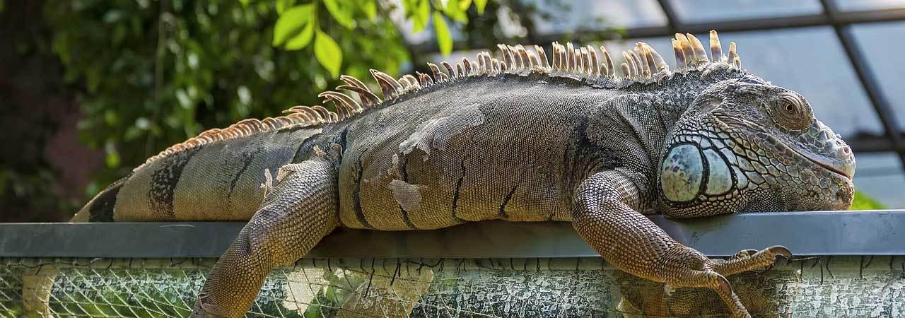 5 Best Reptile Habitat Starter Kits Apr 2019 Bestreviews