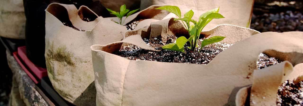 5 Best Grow Bags Nov 2019 Bestreviews