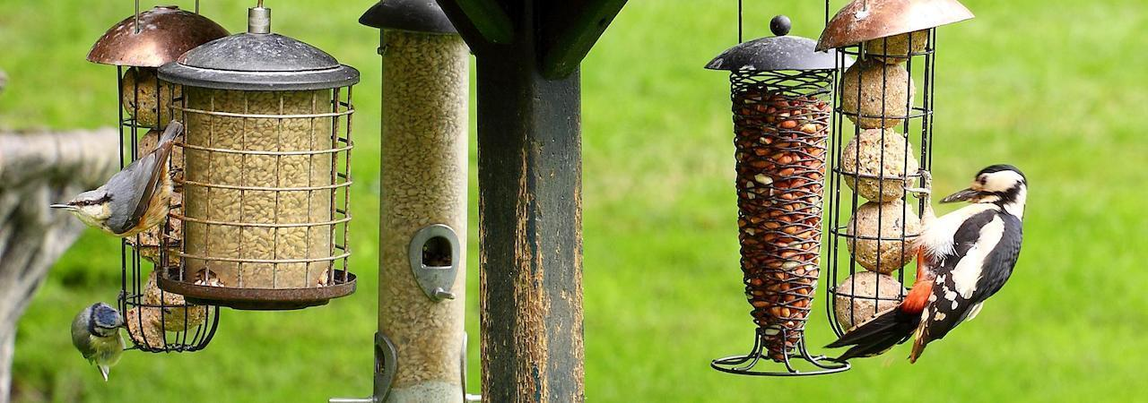 expensive feeders suction com with bird coolstuff utenu cups window feeder