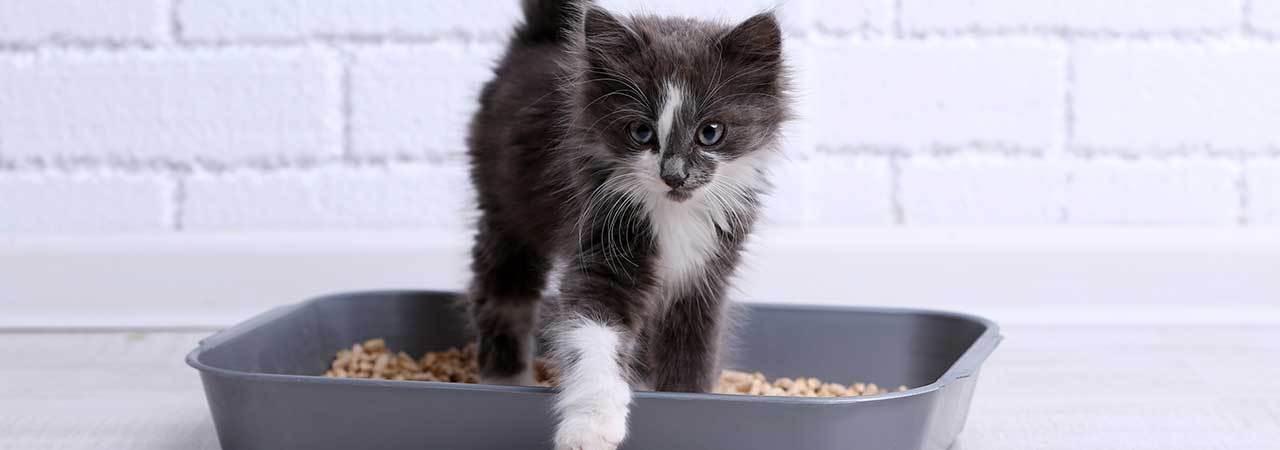 5 Best Biodegradable Cat Litter - Sept  2019 - BestReviews