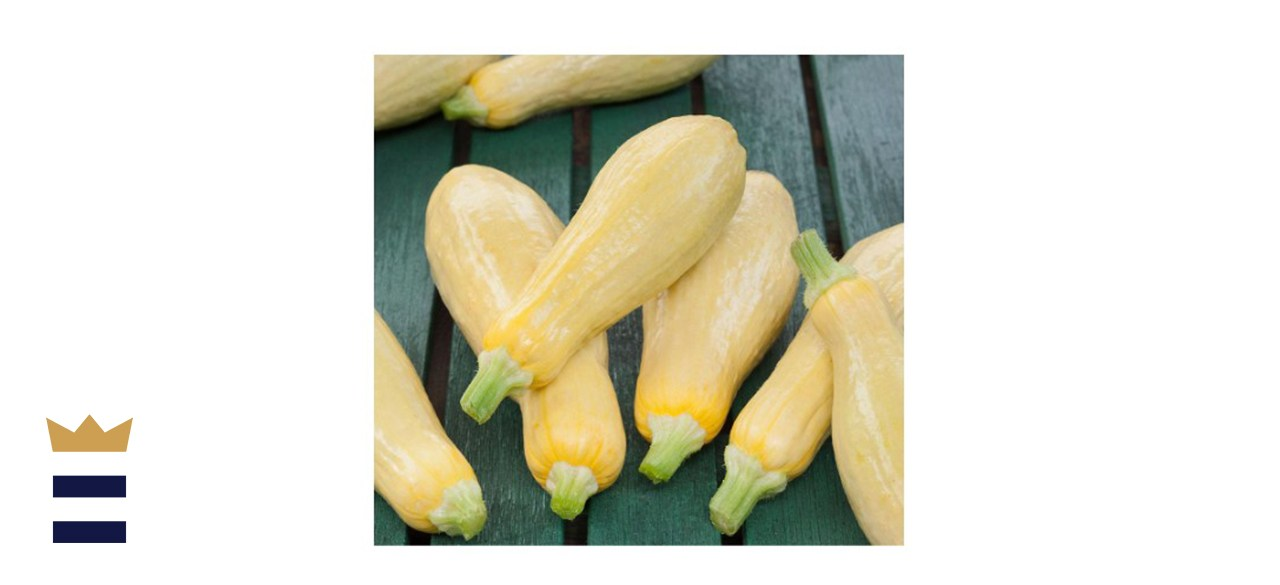 Bonnie Plants Straight-Neck Squash