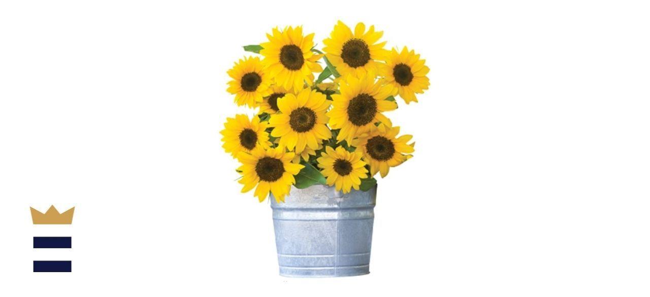 Burpee Sunny Bunch Sunflower Seeds