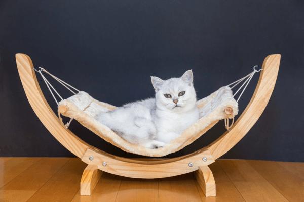 cat hammock3