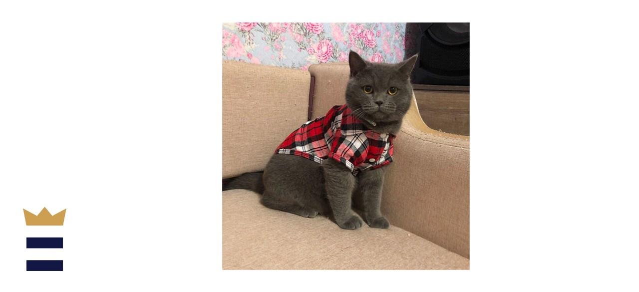 DangShunPet2 Plaid Cat Shirt