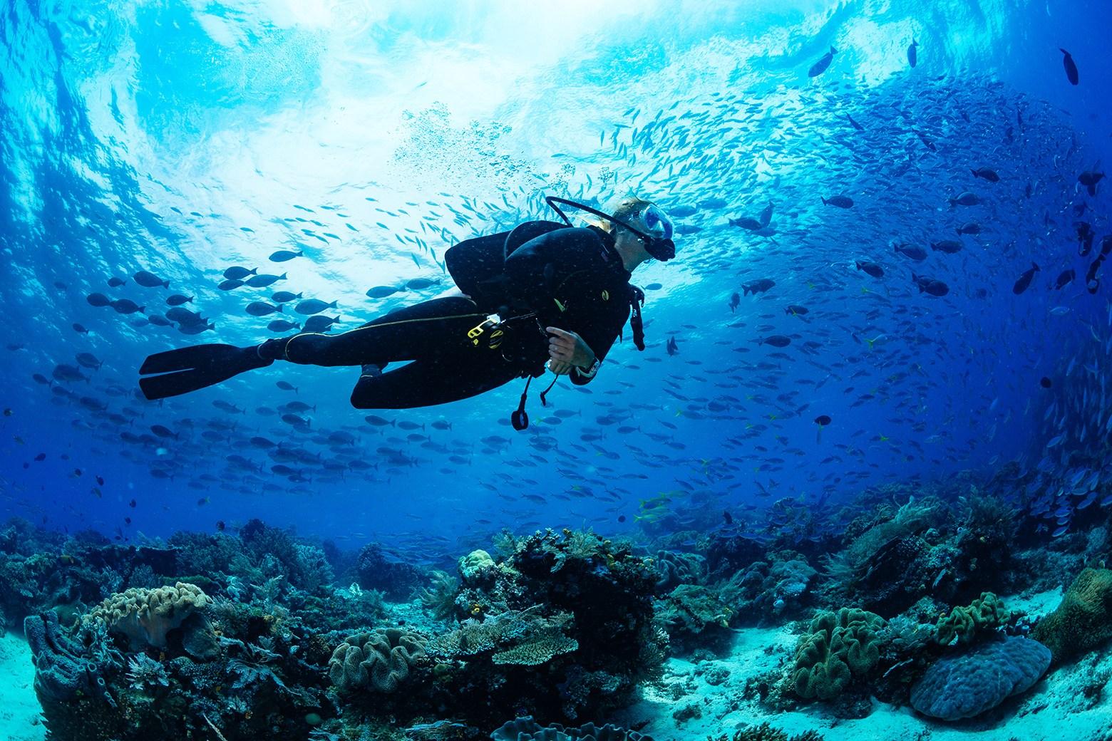 diving fin1
