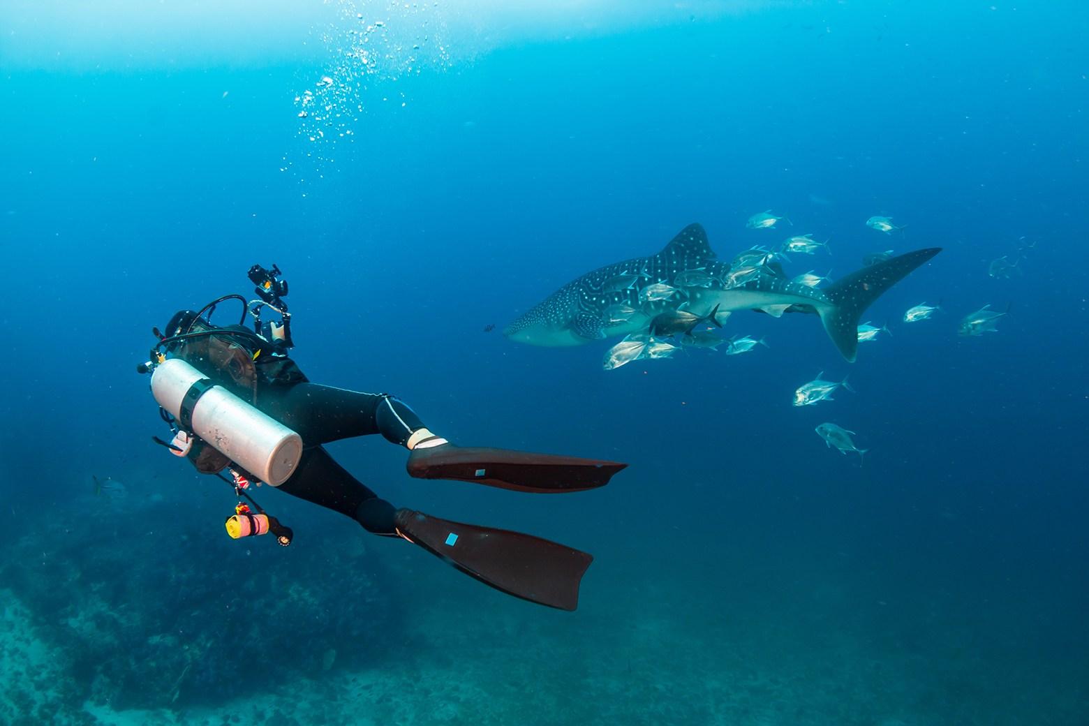 diving fin3