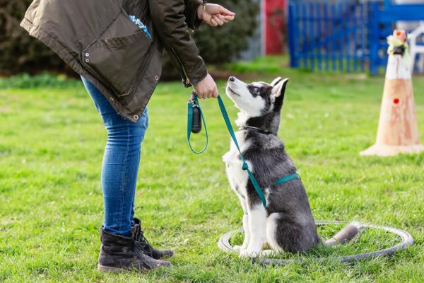 dog training book3