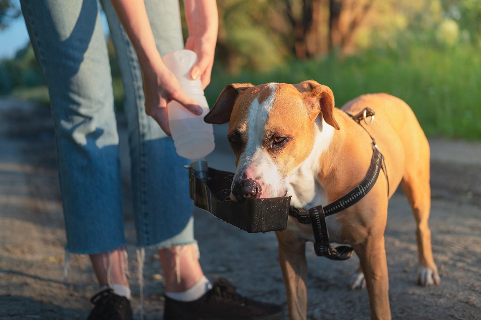 dog water bottles4