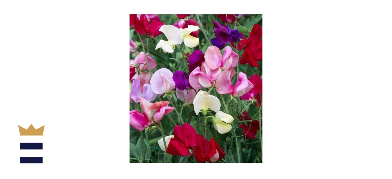 Earthcare Seeds Fragrant Sweet Peas Seeds