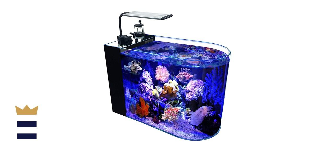GankPike 12-Gallon Saltwater Aquarium