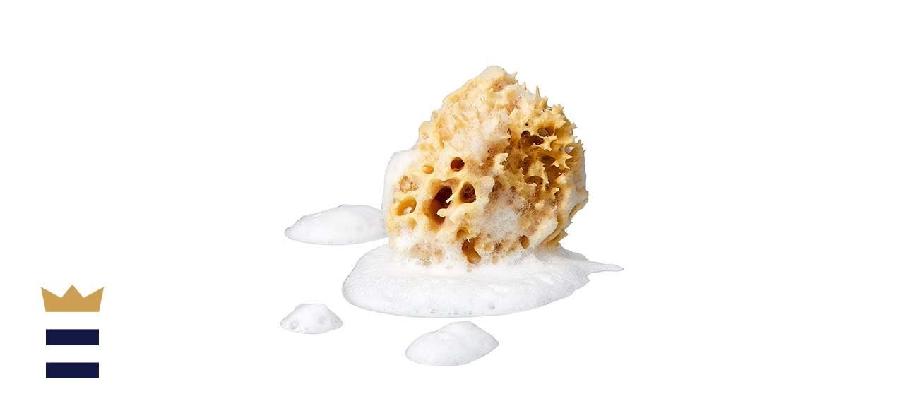 Genuine Honeycomb Sea Sponge