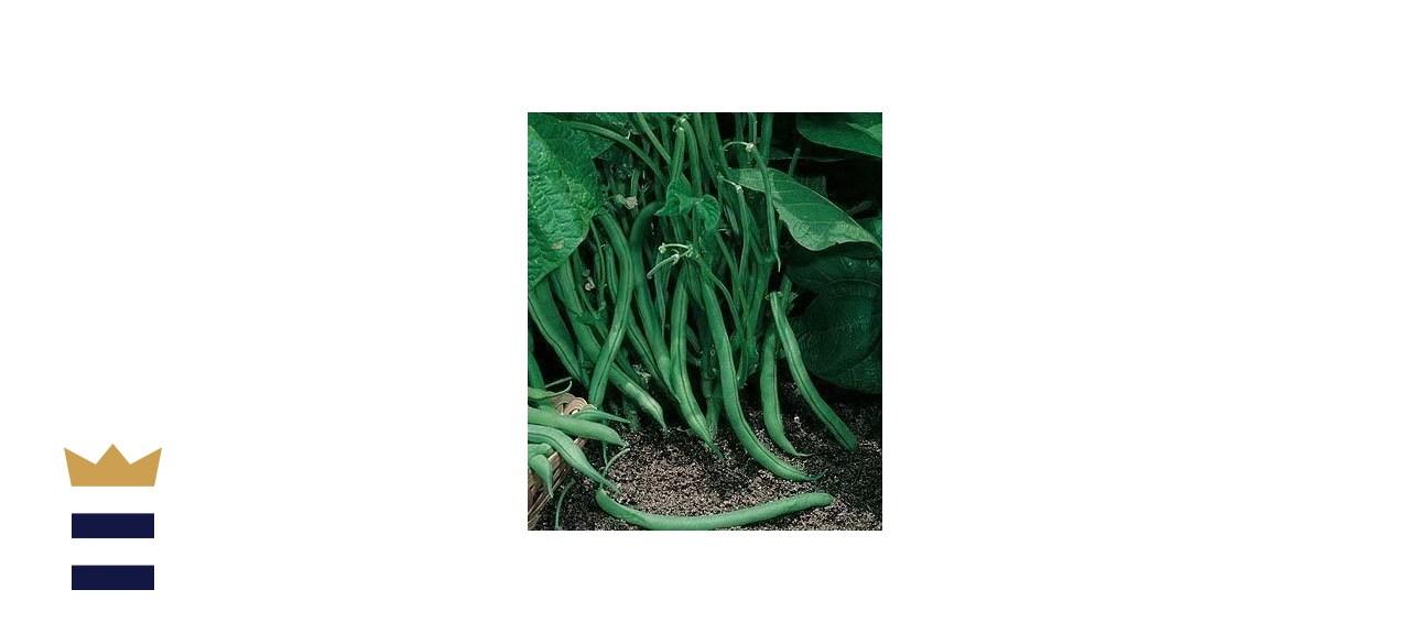 David's Garden Seeds Bean Bush Contender