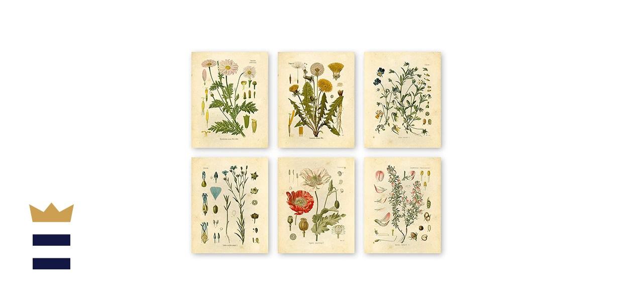 Ink Inc Botanical Prints