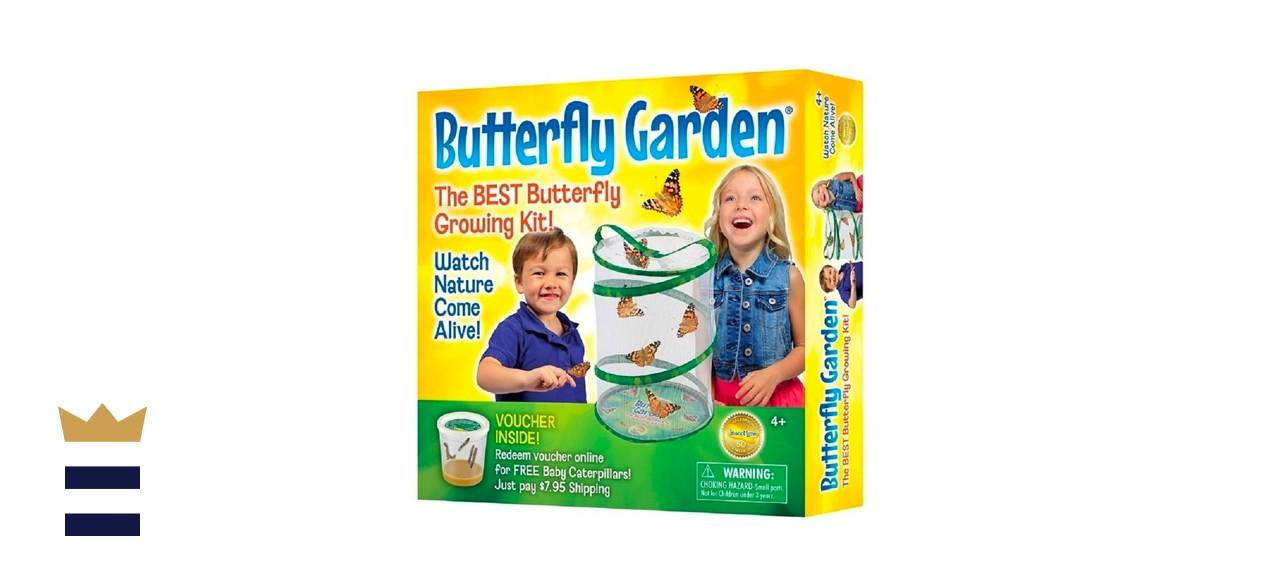 Insect Lore BH Butterfly Growing Kit