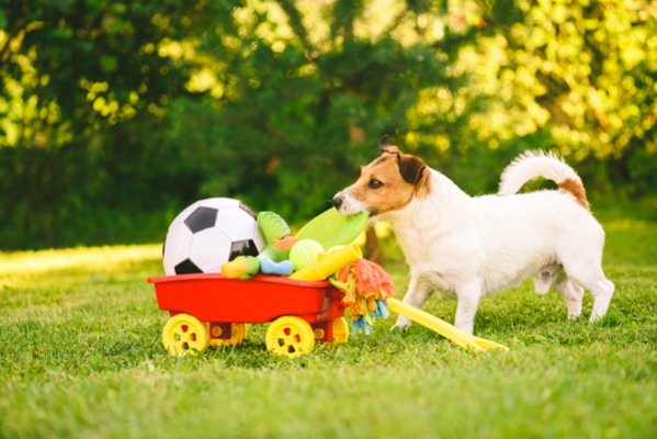 interactive dog toys3
