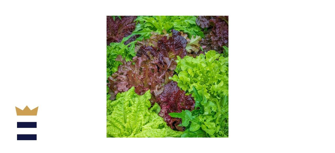 Burpee Looseleaf Blend Lettuce Seeds