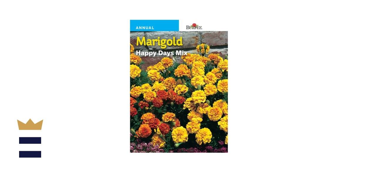 Burpee French Happy Days Mix Marigolds
