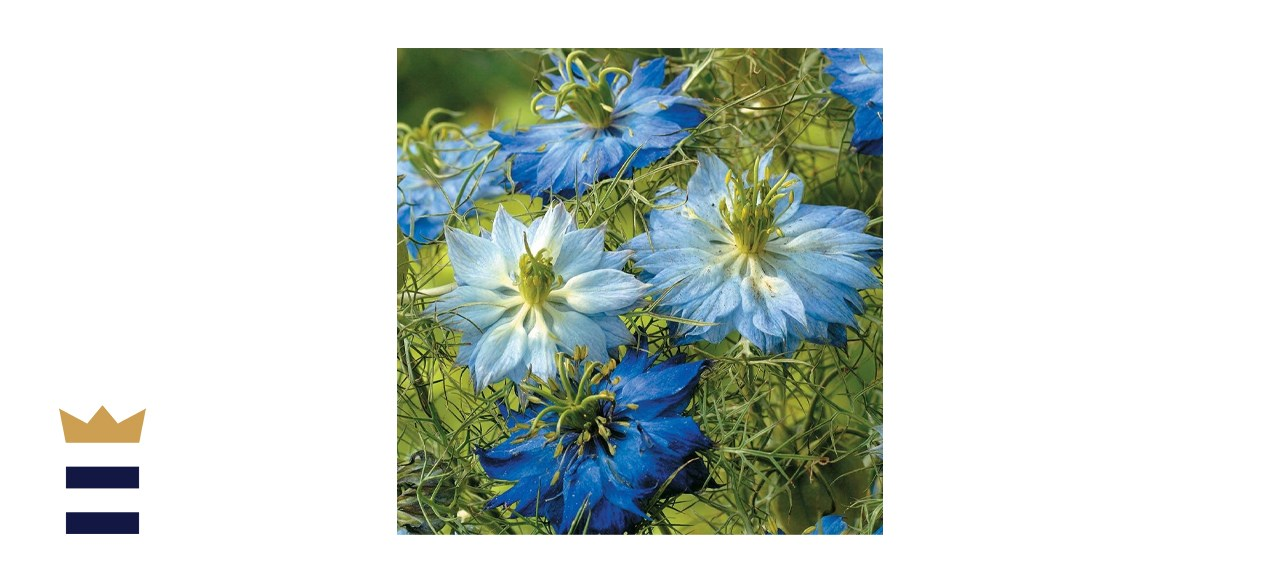 Dirt Goddess Super Seeds Non-GMO Love in a Mist Flower Seeds