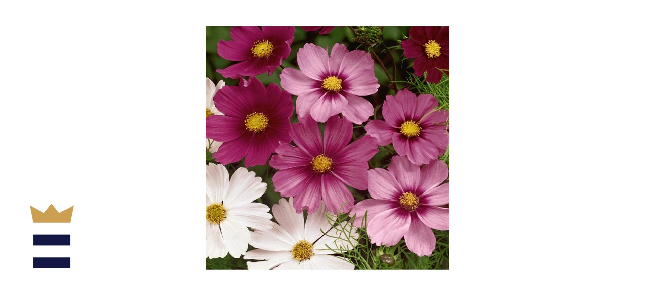 Outsidepride Cosmos Flower Seed Mix