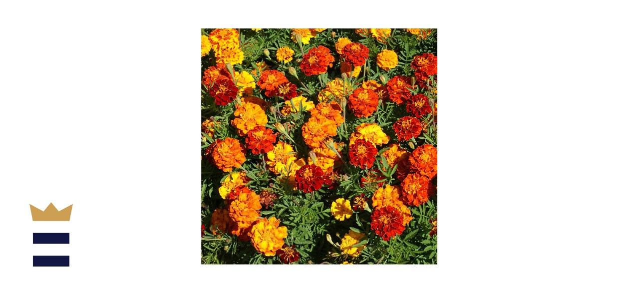 Outsidepride Marigold Flower Seed Mix
