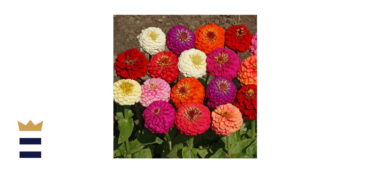 Outsidepride Zinnia Elegans Flower Seed Mix