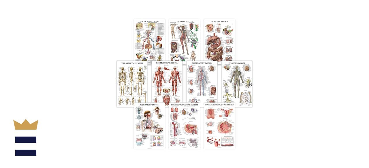 Palace Learning's Anatomical Poster Set
