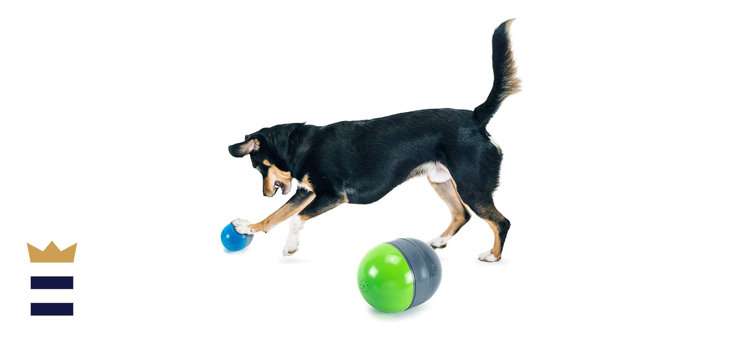 petsafe dog toy
