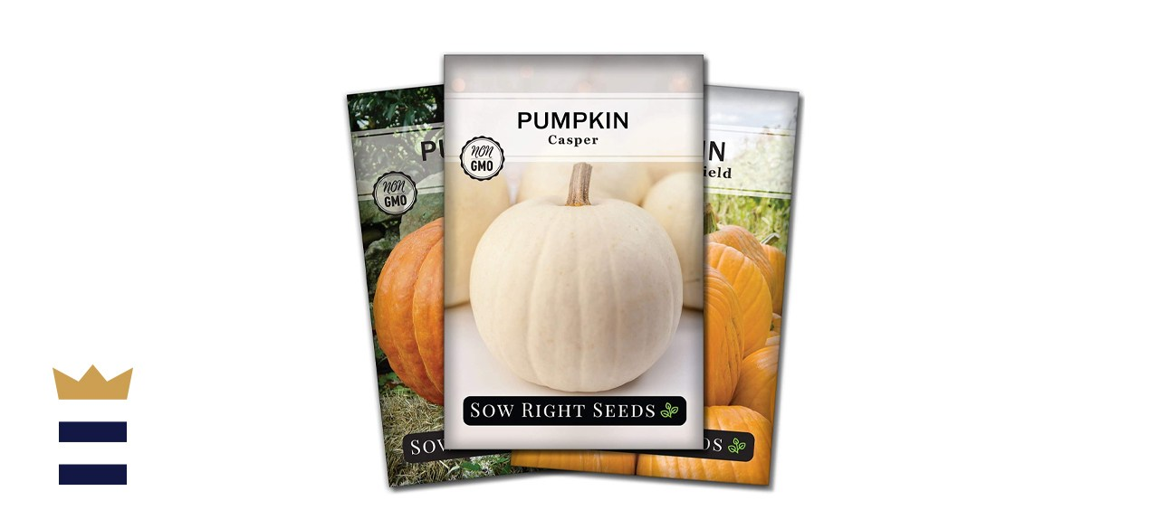 Sow Right Seeds - Pumpkin Seed Collection for Planting