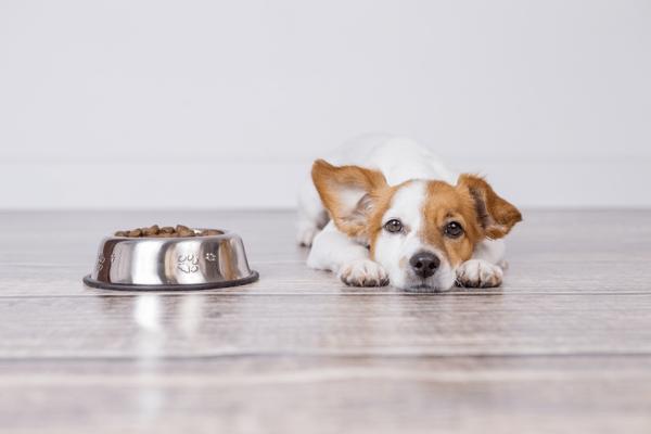 merrick dog food1