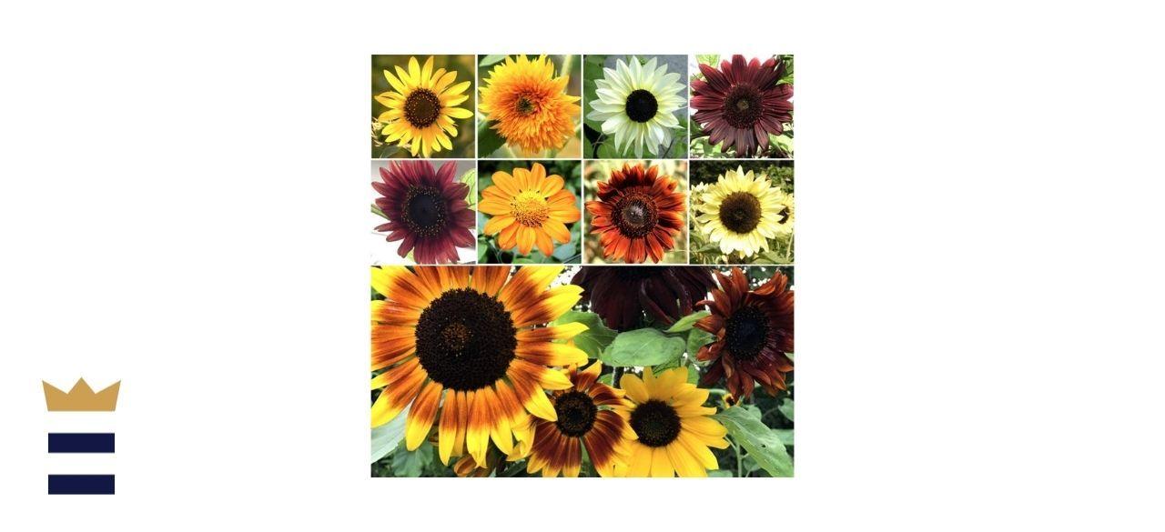 Seed Needs' Sunflower Crazy Mixture