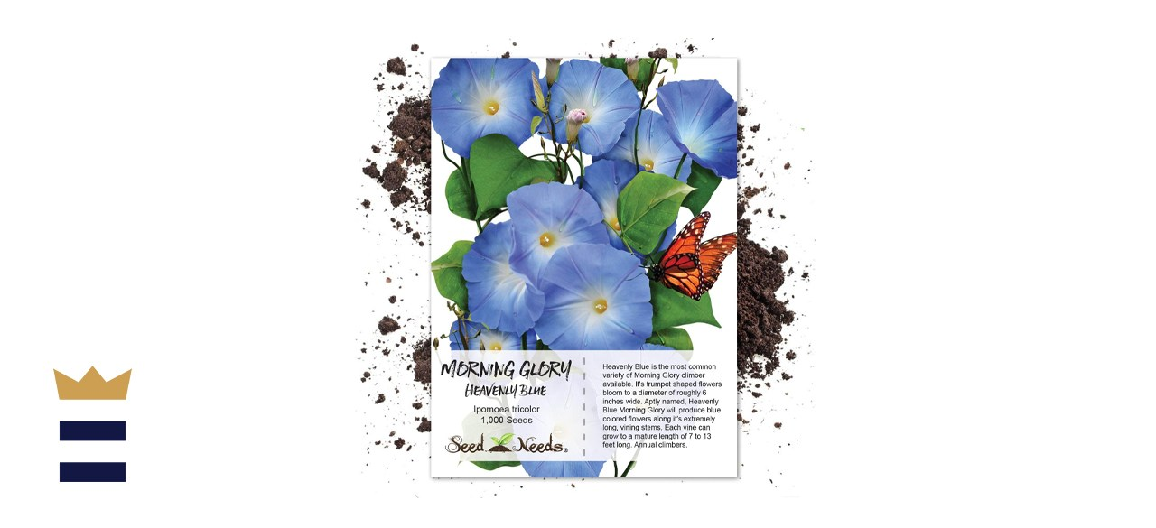 Seed Needs Heavenly Blue Morning Glory Seeds
