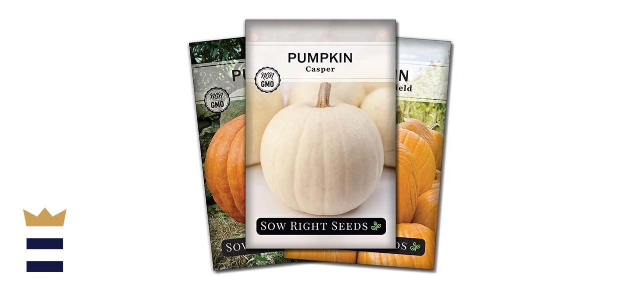Sow Right Seeds Pumpkin Seeds