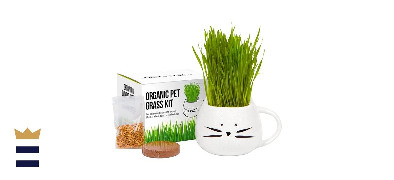 The Cat Ladies Organic Cat Grass Growing Kit with Cat Planter