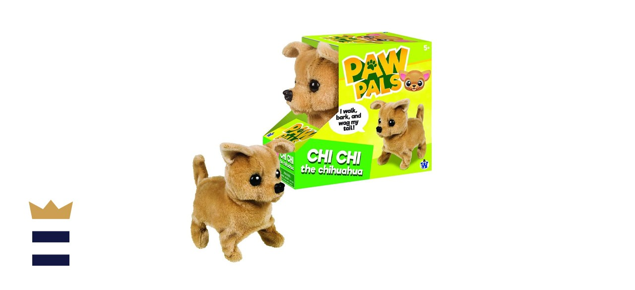 Westminster Chi-Chi Chihuahua
