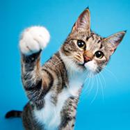 cat probiotics2