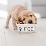 merrick dog food2