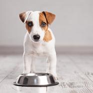 Victor dog food2